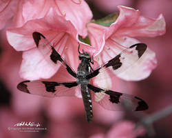 Dragonfly by RobAndersonJr