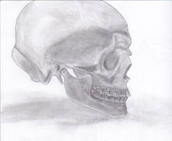 Skull reference pencil