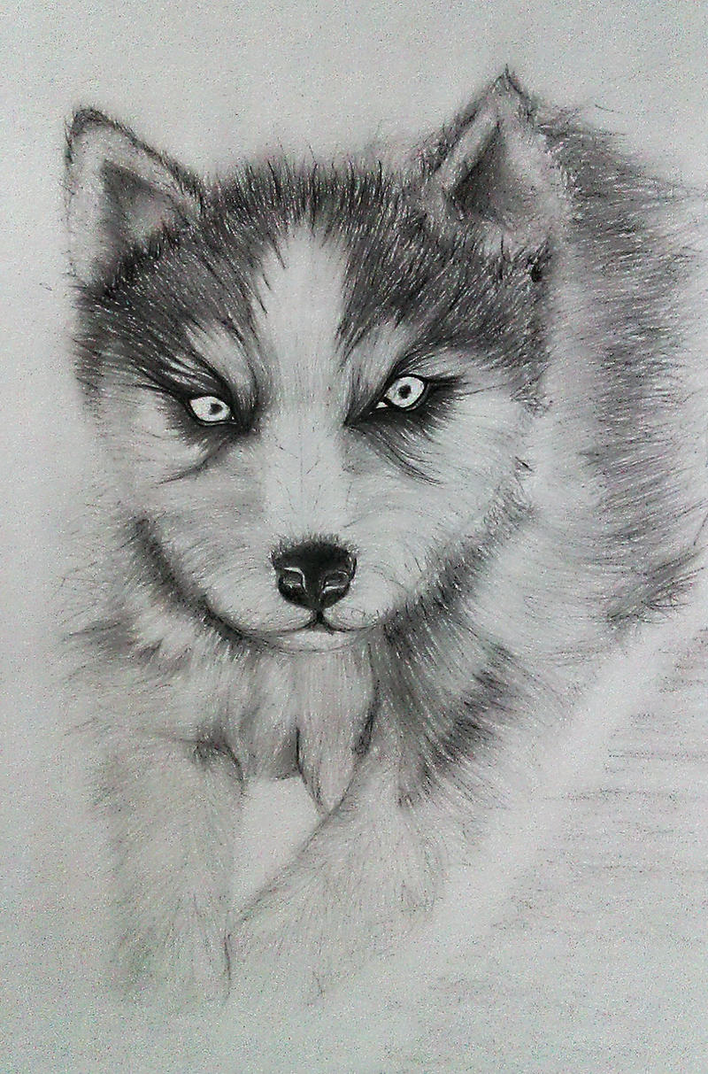 Siberian Husky Puppy Drawing by SyAMAnThRaCute Husky Puppy Drawings