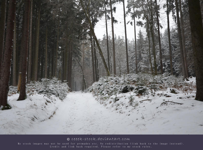 Wintertime 17 - Path by ceeek-stock