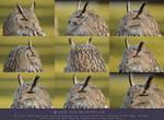 Owl stock pack