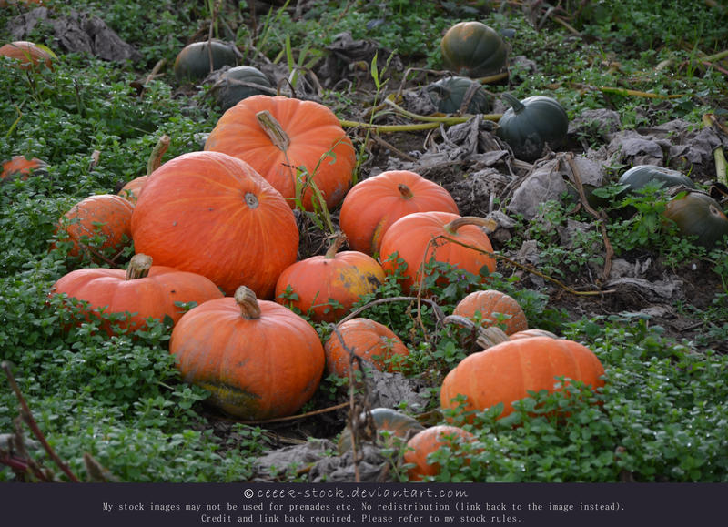 Pumpkins 13 by ceeek-stock