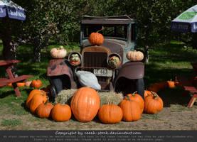 Pumpkins 16