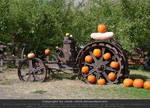 Pumpkins 15
