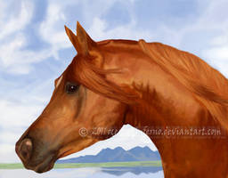 Chestnut Arabian by oceans-inferno