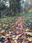 Automn Forest Path