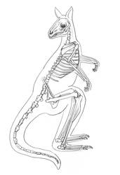 Kangaroo Skeleton by Lacie-Lady-Lynx