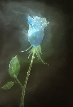 blue rose (a feeling of winter nights...)