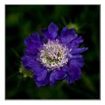 Colour me purple by Sadandal