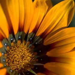 Bush Spring X by Sadandal