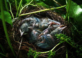 Newborns by JanKacar