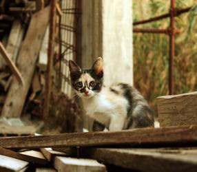 Trash Kitten by JanKacar