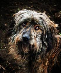 Borek from Dog Shelter by JanKacar