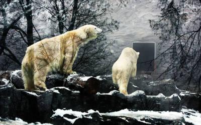 Polar Bear Reflection by JanKacar