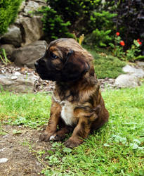 Village Puppy by JanKacar