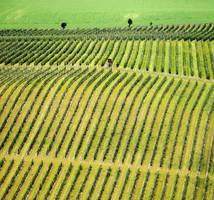 Vineyard by JanKacar