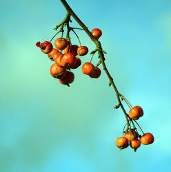 Miniapple by JanKacar