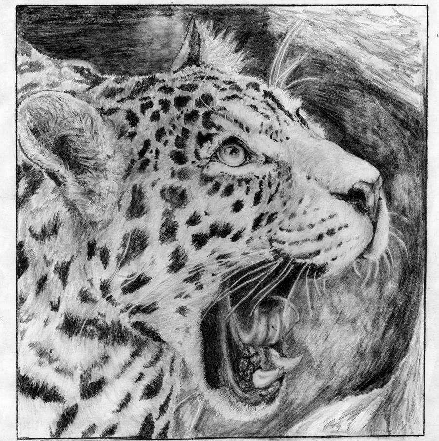 Jaguar Drawing: Jaguar By COla013 On DeviantArt