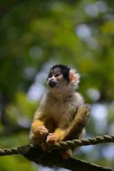 Monkey by EnNaS