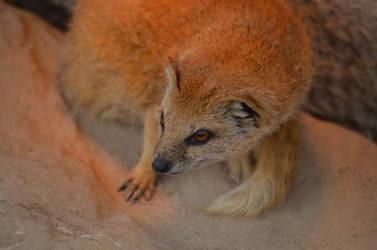 Mongoose by EnNaS