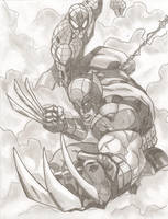 Wolverine and Spider-Man by stipher30