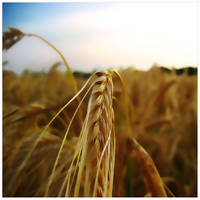 Field portait by AniMal-e