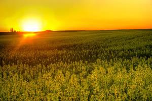 Sun shine by AniMal-e