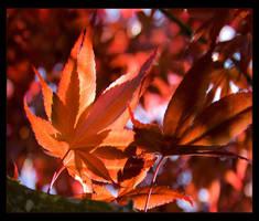 Autumn Symphony by AniMal-e