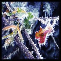 Retro Winter