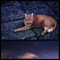 The Cat and the Stars...