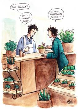 This begonia