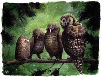 Four little owls by JohannesVIII
