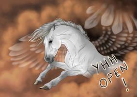 Flying star - YHH OPEN!