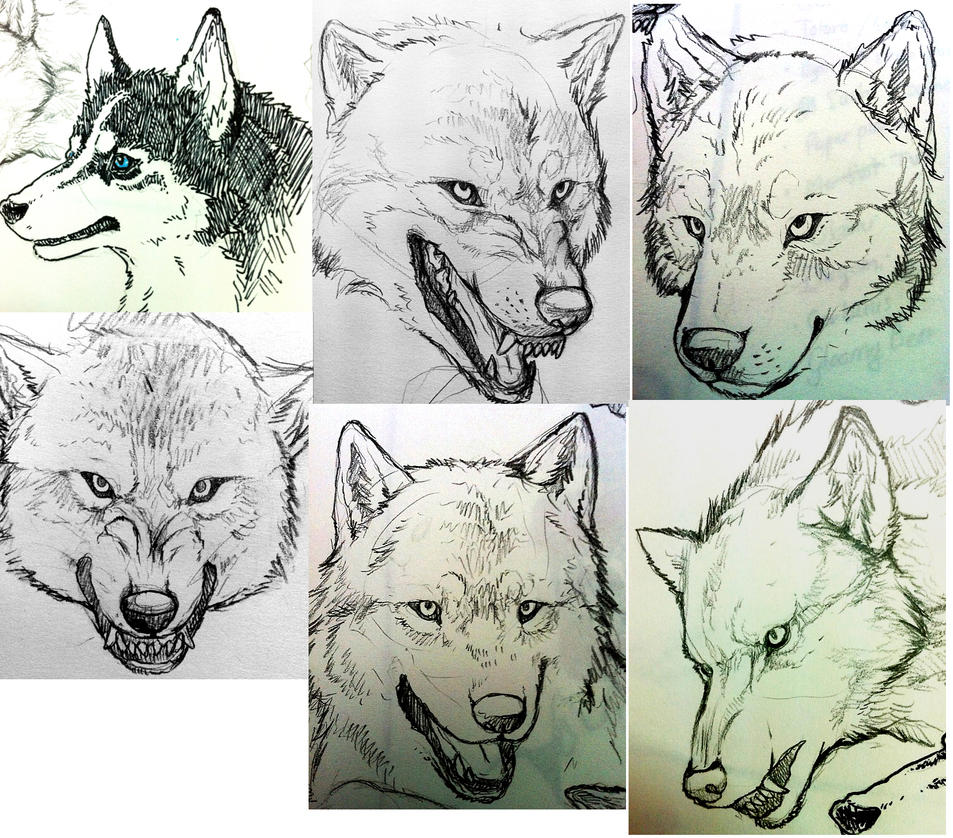 Line Drawing Wolf Head : Wolf head sketches by byowt on deviantart