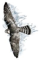Falcon by dcbats2000