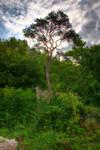 Tree to Ruin Duernstein