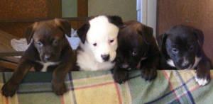 puppies :D