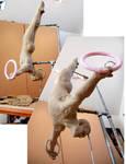 Gymnast update 3