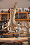 Gymnast almost fin 2