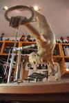 Gymnast almost fin 3