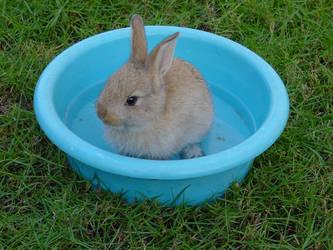 My first rabbit Jack by jazzypizzazzy