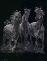 horses by itsmesenorsatan