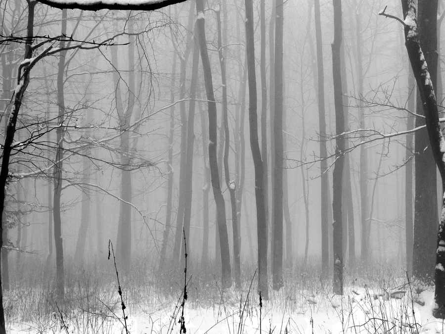 Pale Forest Tumblr Traffic Club