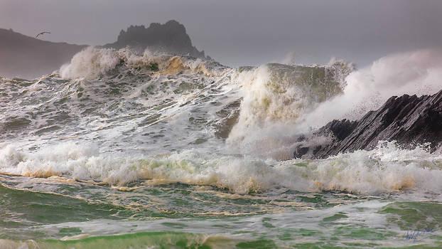 Atlantic Wildness