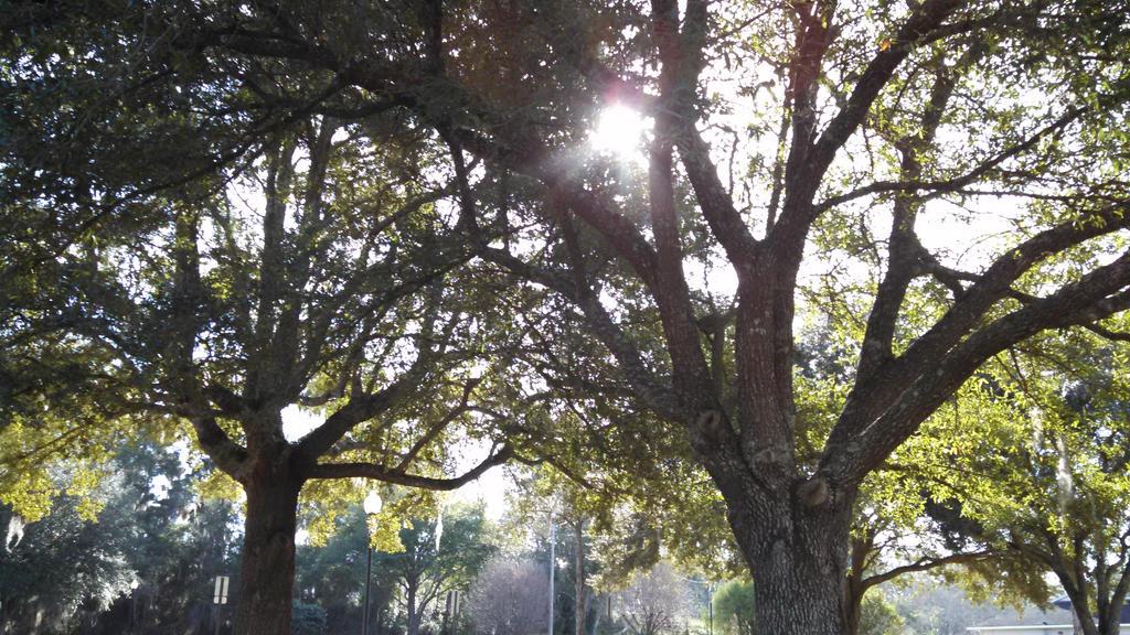 Majestic Trees? by JenniferBee