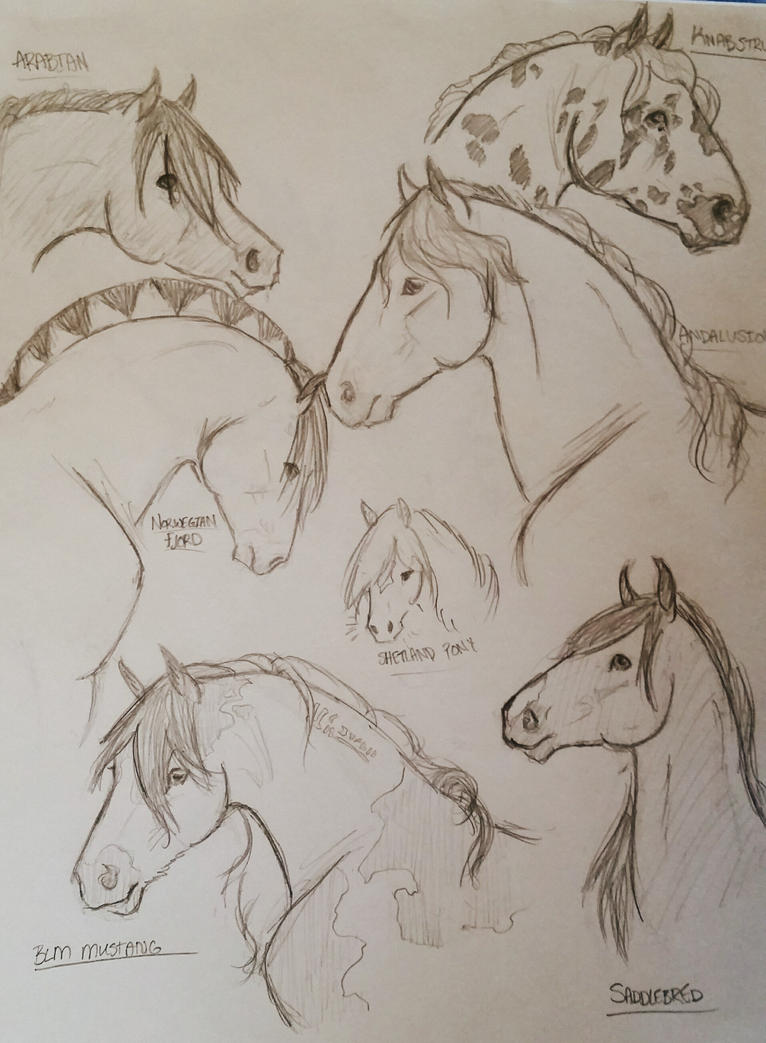 Horse Breed sketches by JenniferBee