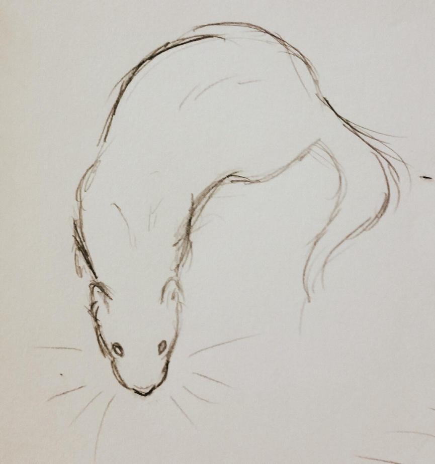 Ferret by JenniferBee