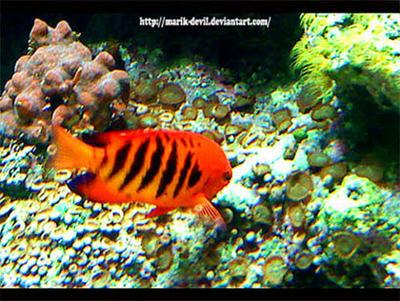 Shinny Fish by marik-devil