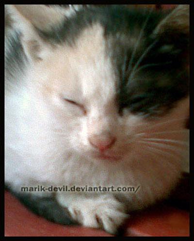 sleepy kitty XD by marik-devil