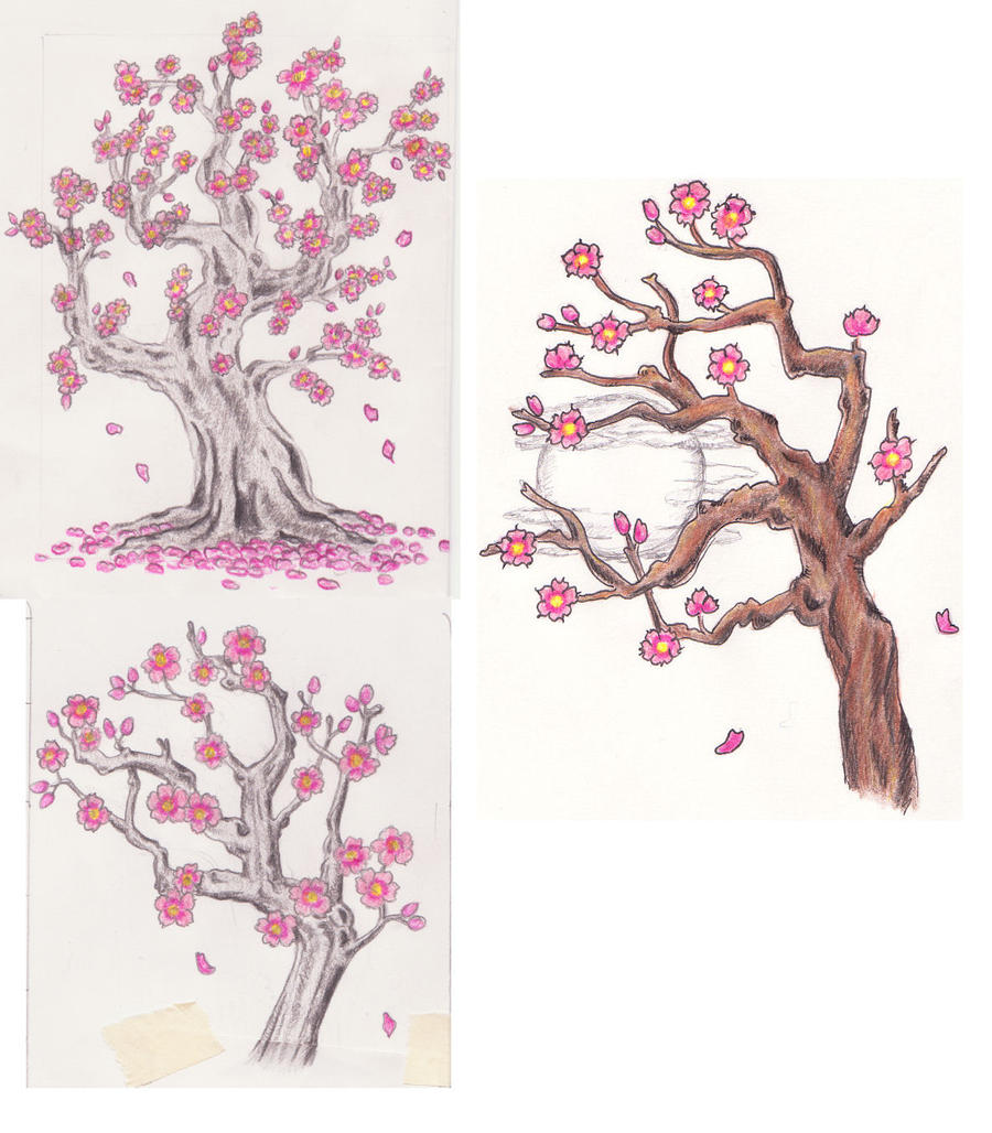 Blossom Tree Drawing: 3 Cherry Blossom Tree Sketches By Lexie613 On DeviantArt